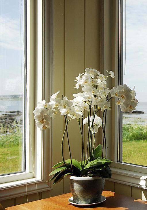 Himmelhav orkide om oss